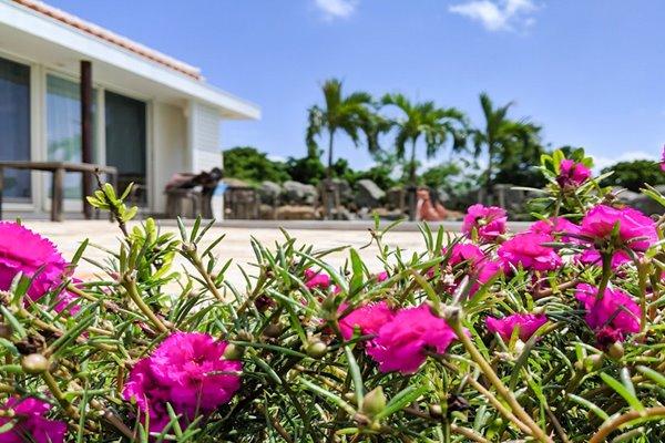 沖縄のハイビスカス